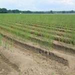 Jobfield 3000. Village Resort Exhibition 2008. Detail of asparagus fields near Beelitz.